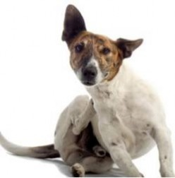 Dog Dandruff . . . Dog Dander: Is Your Dog A Little Flakey?