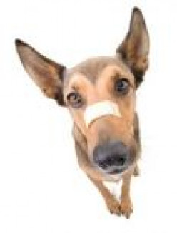 In the Know: Dog First Aid 101