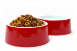 Dog Bowls & Dog Feeders: Choosing The Right One Just Got Easier!