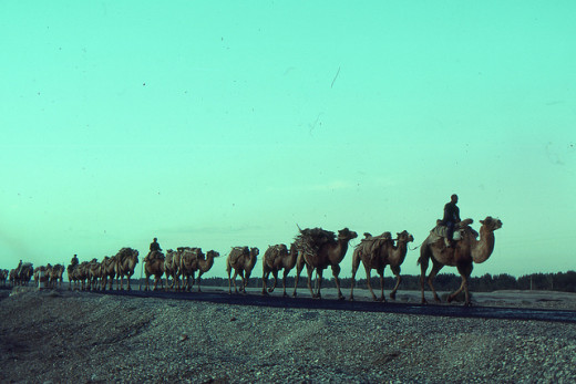 A caravan on the Silk Road, Kashgar