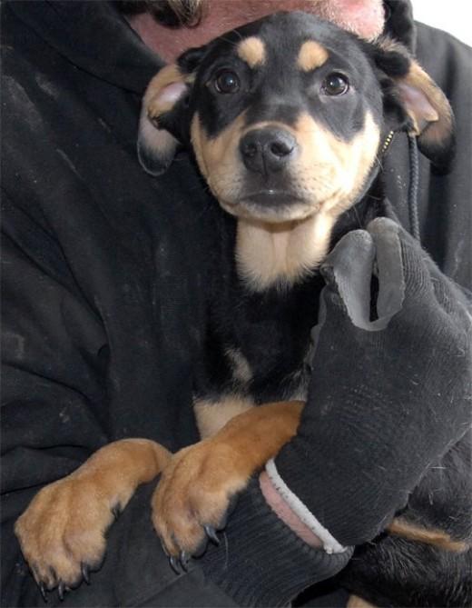I'm no longer an orphan!  Frisco got adopted 3/9/13.