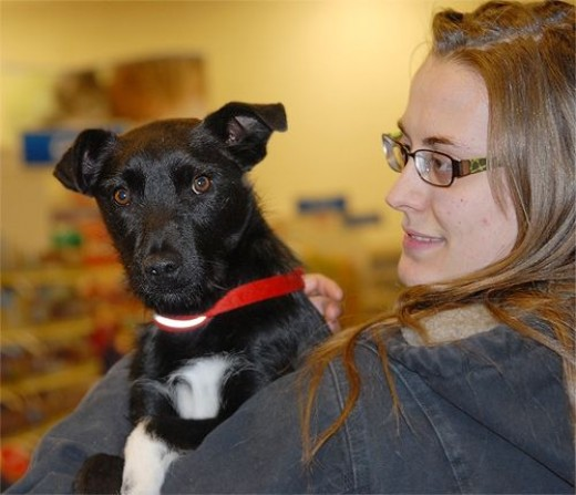 Russell, one of our most popular dogs awaiting adoption, is pictured here with Kristen, the PetSmart trainer who supports our mission in many ways.