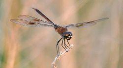 Dragonfly by 68photobug