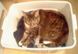 The Laundry is Clean