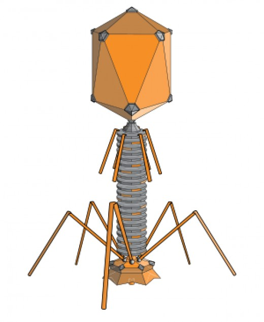 Bacteriophage – a virus that attacks a bacteria.