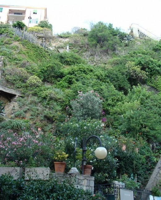 This is a garden on the side of the hill in Manarola.