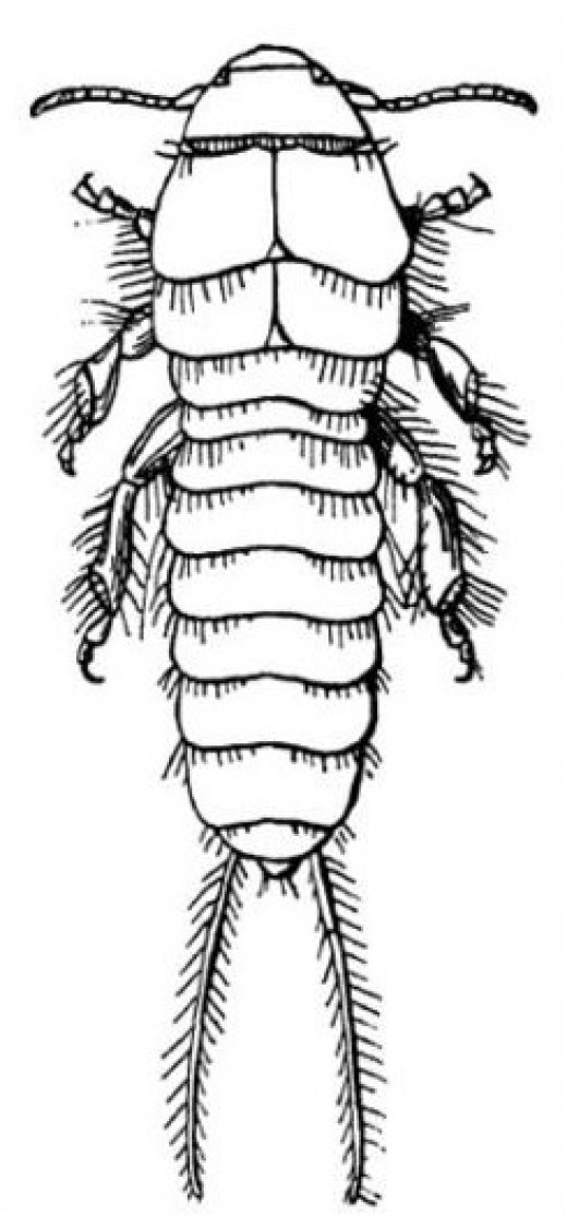 Parts of an arthropod's body