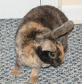 Tips On Taking Care Of A House Rabbit and Rabbit Supplies