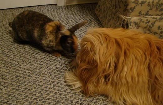 Amerisa with our dog, Bowzer.