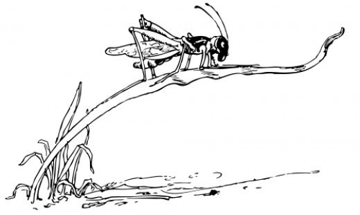 Free Coloring Pages Of Locusts Locust Coloring Page
