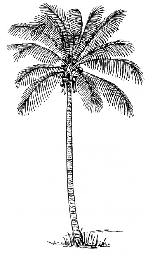 printable palm tree coloring pages on art