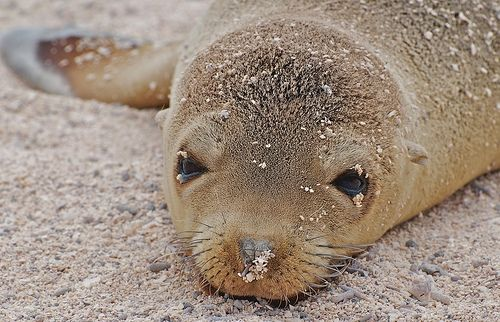 Sea Lion Pup Picture