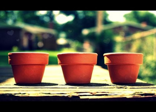 Terra Cotta Pot Picture