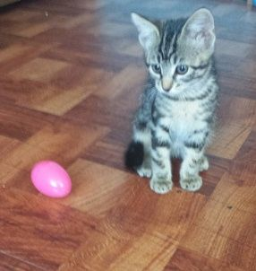 Kitten and Egg