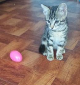 Kitten and Egg