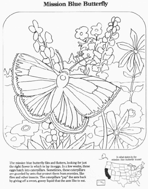 Picture of a Butterfly to Color