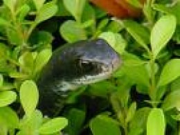 Tiny hiding garden snake.
