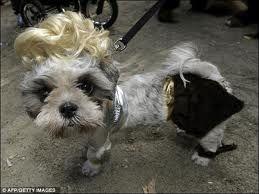 Blond Dog Wig