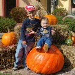 The Best Pumpkin Patches in Phoenix, Arizona