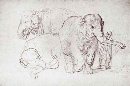 elephant Rembrandt