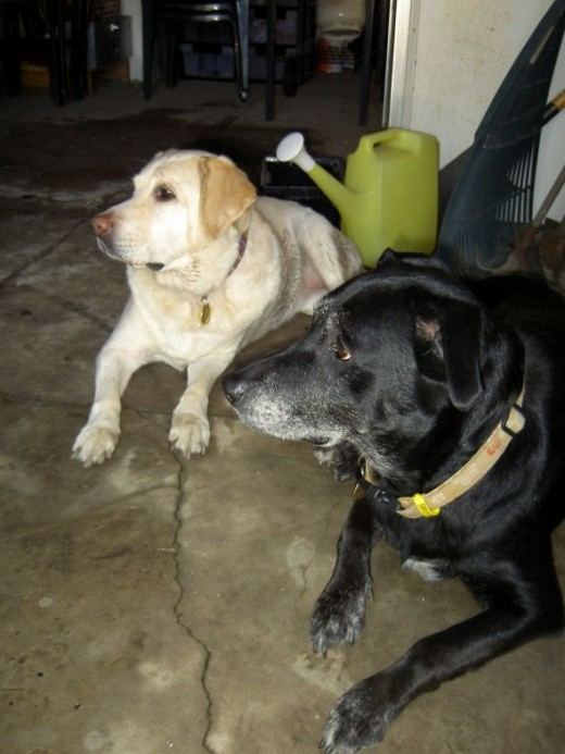 Echo with her best friend Jesse
