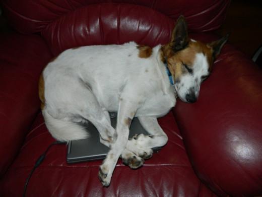 Sleeping on a warm laptop