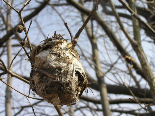 I found this nest on an early Spring day