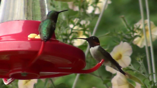 Hummingbirds are amazing