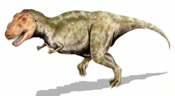 Tyrannosaurus Dinosaur Image
