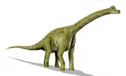 Brachiosaurus Dinosaur Clip Art