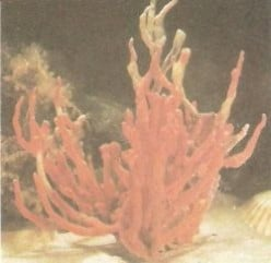Are Sea Sponges Plants or Animals?