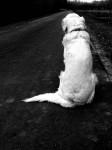 Abandoned dog still waits