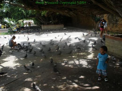 Inside Parque de Las Palomas