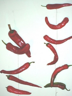 Air dry peppers by hanging