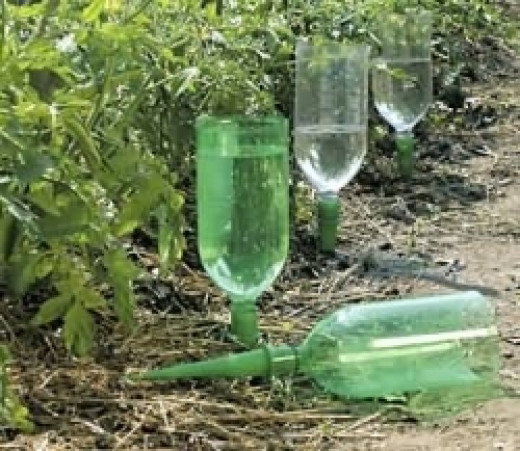 Watering Spikes for Recycling Plastic Bottles in the Garden