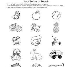 Free Sense of Touch - My five senses