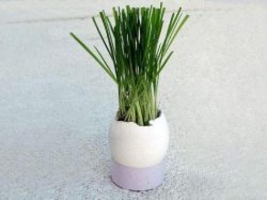 Egg Shell Planter Craft