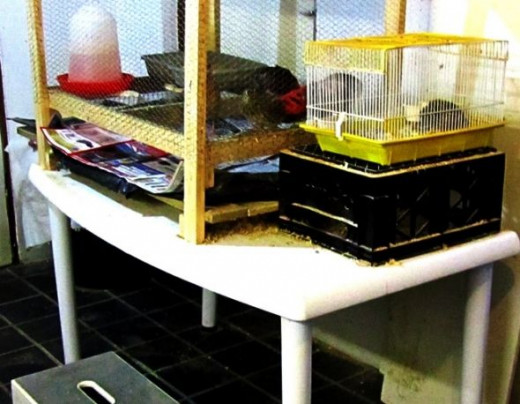 the cage can stand on a table, with a plasric sheet underneath covered with newsapaper for a convenient cleaning