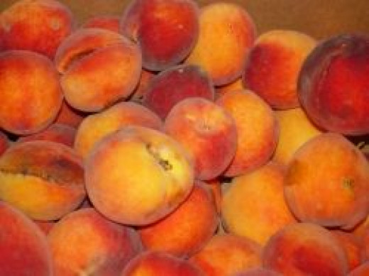 Grow Peach Tree from Seed or Pit