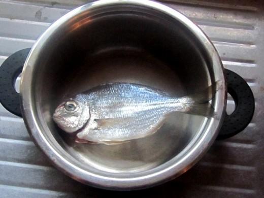 fish undersized