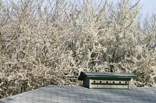 Cherry-Plum Blossoms & Bird House