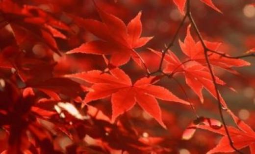 Fall Foliage: Timothy R. Hall