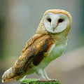 Guide to Owls for Kids of All Ages