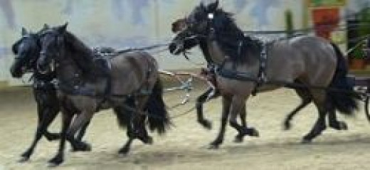 Bardigiano Pony                      source: Wikipedia