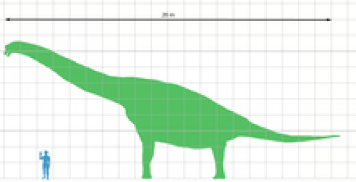 Scale of the largest Dinosaur
