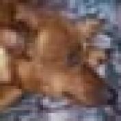NedD profile image
