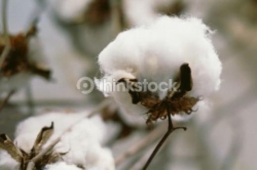 Memory Quilt - Cotton Plant