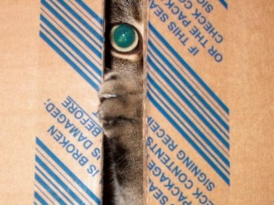 While a man's home may be his castle. A cat's castle is as close as the next empty open box.