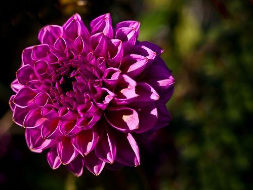 By William Warby, flickr (www.flickr.com/photos/wwarby/4085740597)