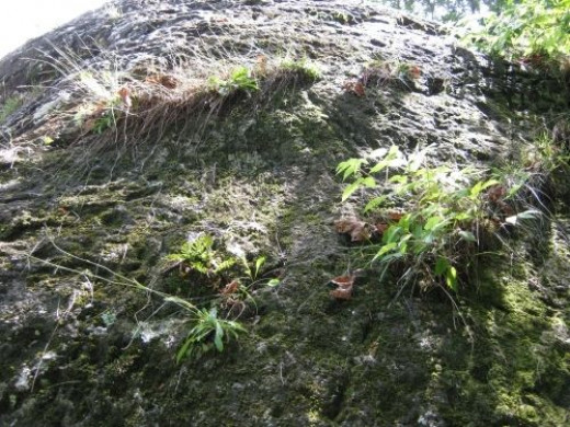 Plants seem to like to grow on boulder too. Especially on the back top.